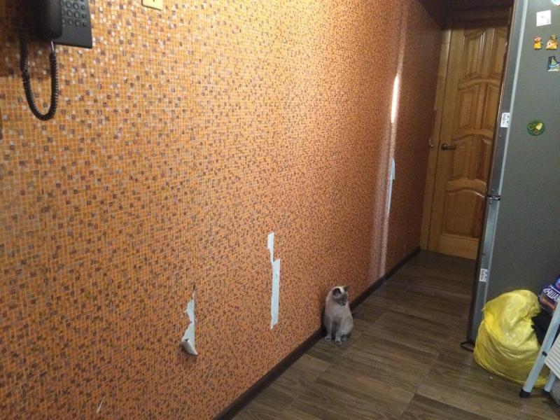 Как мы сделали ремонт одним рулоном обоев за 1000 рублей