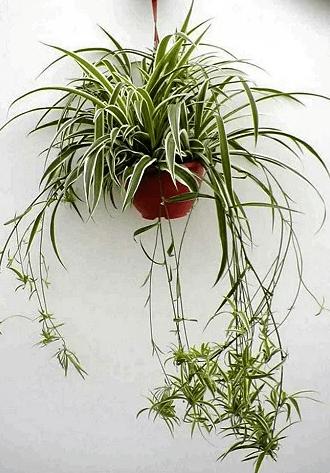 И интерьер украсят, и кислорода добавят! 6 неприхотливых комнатных растений