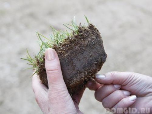 Аэрация газона своими руками. Из чего сделать прибор для аэрации газона своими руками