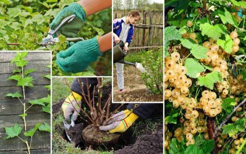 Какие кусты можно сажать осенью. Осенняя посадка кустарников: полезные советы опытных садоводов