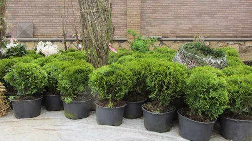 Когда садить деревья осенью. Посадка и пересадка деревьев осенью: рекомендации опытных садоводов