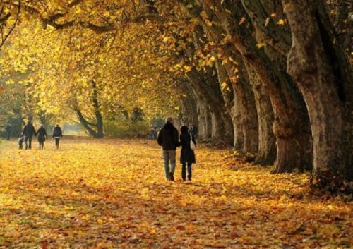 Труд человека осенью. НОД в старшей группе «Осенние хлопоты человека»